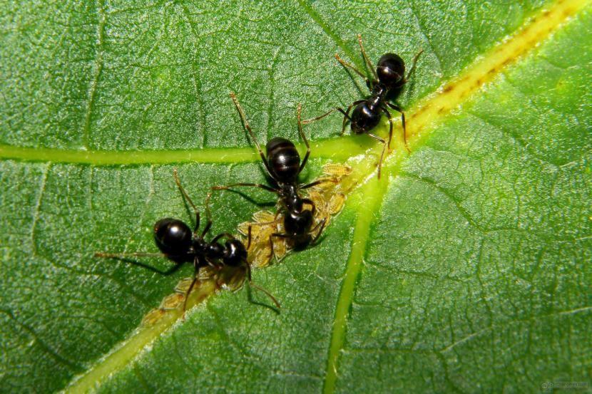 cómo eliminar las hormigas en las plantas | hormigas, las plantas