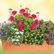 bildergebnis f r balkonpflanzen sonnig flower pinterest balkonpflanzen sonnig. Black Bedroom Furniture Sets. Home Design Ideas