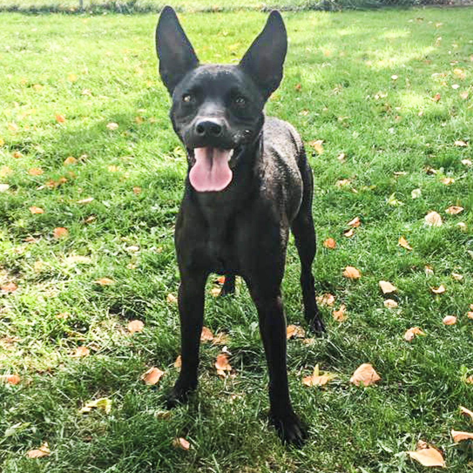 Found Dog Female Fairview Park, Cleveland, OH, USA