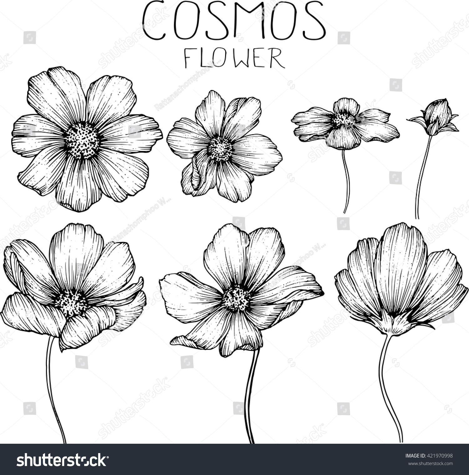 Cosmos Flowers Drawings Vector Sponsored Sponsored Flowers Cosmos Vector Drawings Blumen Zeichnung Blumen Zeichnen Zeichnungen