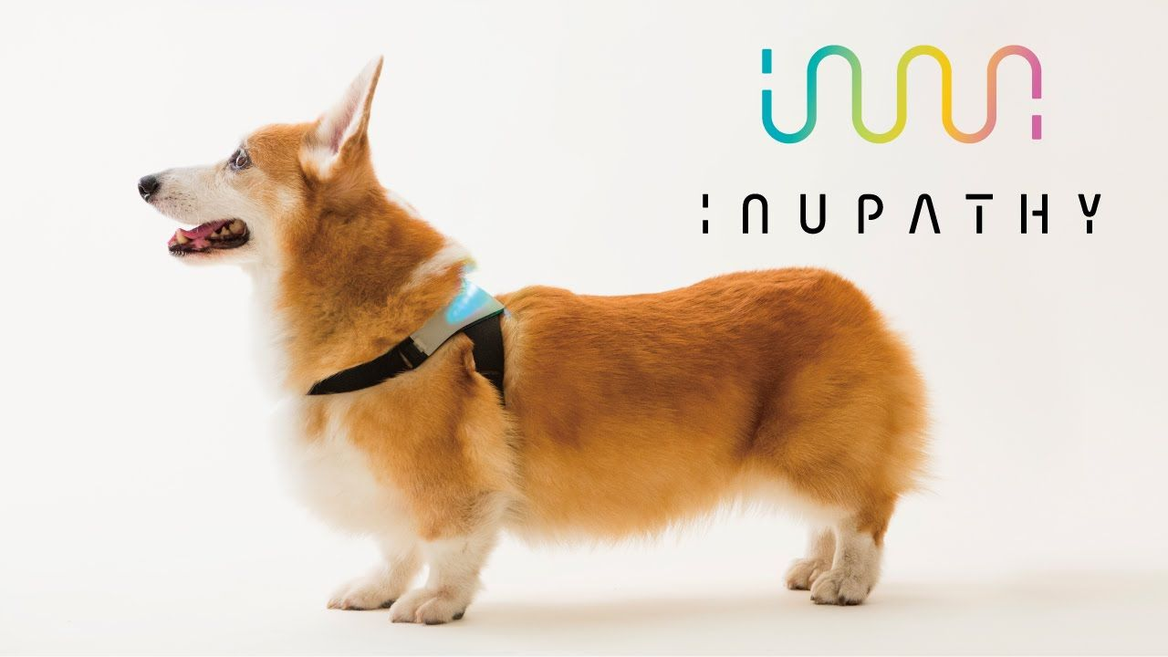 Inupathy A Device That Visualizes A Dog S Emotions Using Colored