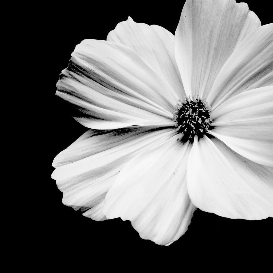 Artizan Black White Pinterest Flores Naturales Flores