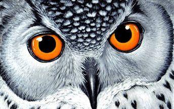 owl wallpaper 3 - High Definition : Widescreen Wallpapers.