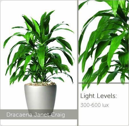 Low Light Plants   Live Plants For Offices