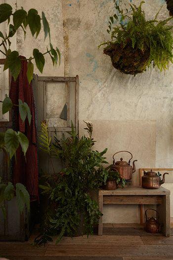 """雰囲気ある置き方。植物の色味と小物がよく合っています。  画像は""""BELLOCQ""""というお茶の専門店の一角に置かれた緑ですが、参考になる置き方です。"""