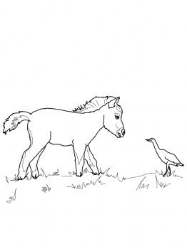 miniature horse foal and bird