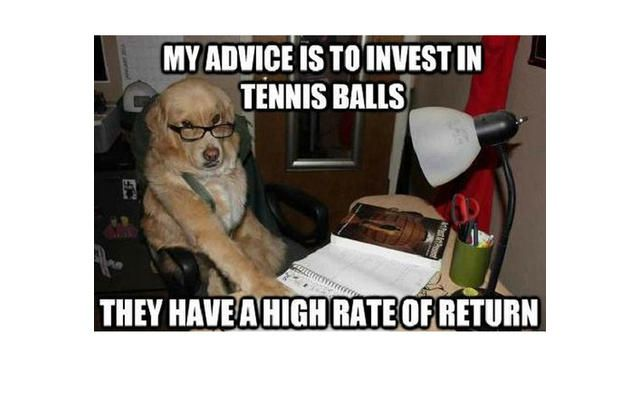 Yes This Is Dog 31 Of The Best Dog Memes Ever Slide 64 Pawsome Funny Dog Memes Dog Memes Funny Dogs