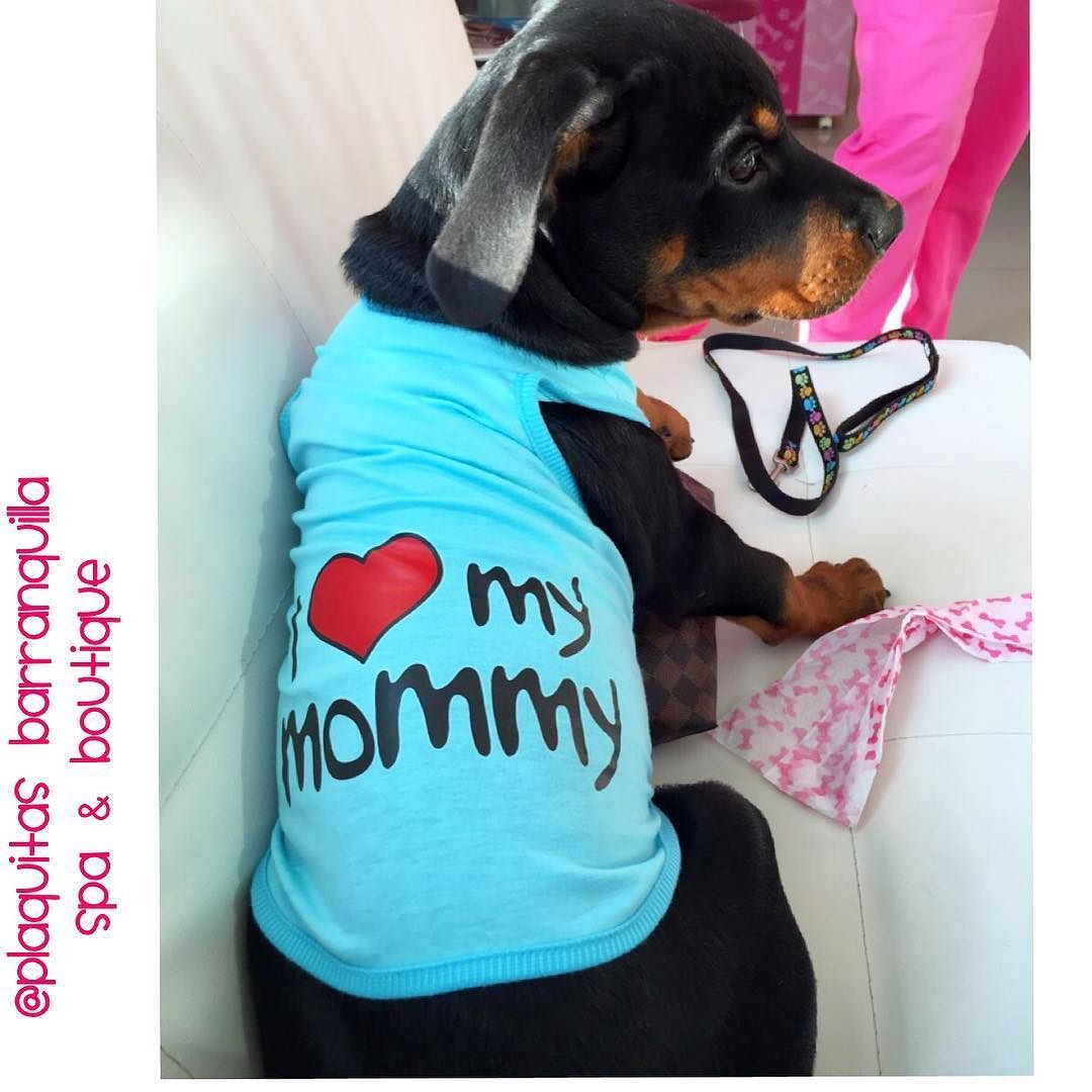 THOR  Con su Camisetita de I LOVE MY MOMMY Visitanos! Calle 82 # 42 G -06 LOCAL 4 !! 3005135313-3203046 !! Horario LUNES - DOMINGO Y FESTIVOS 8 am - 7 pm en Barranquilla ! envios a toda  #COLOMBIA // we also ship inside #usa  #plaquitasbarranquilla #petstagram #dogdress #dogfashion #petboutique #cachorro  #petstore #perritoscolombia #doglover #doggrooming #doglove #dogshirt #petshop #maicao #cali #medellin #dogspa #petspa #cartagena #bogota #barranquilla #doggrooming #spacanino  #dogboutique…