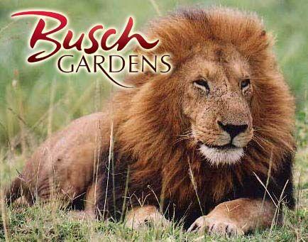 15594b3325268c52ca59d4d7fd6e4d3c - Does Busch Gardens Tampa Have Lockers