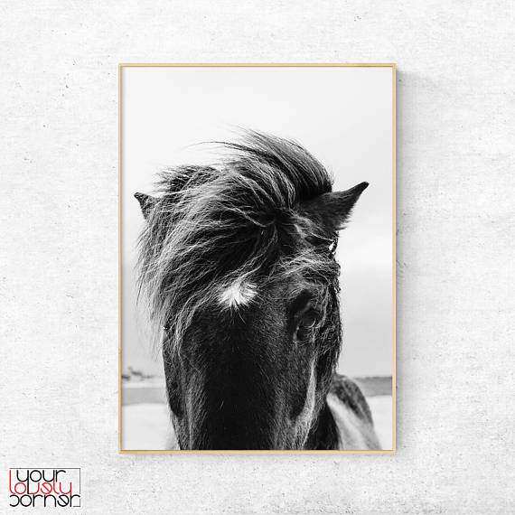 Horse photography black and white art animal wall poster