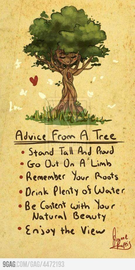 Live life like a tree.