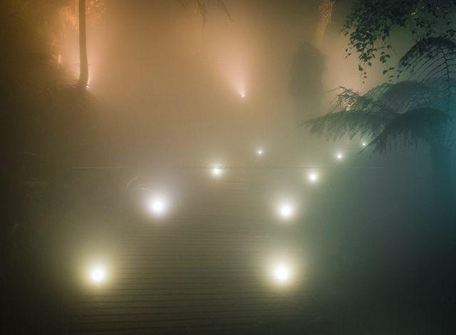 ANBG ( Australian National Botanic Gardens ) After DARK by Geoff Dunn