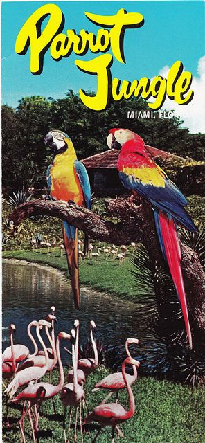 155a29d5baedef91958ebc037a4e719a - Parrot Jungle And Gardens Miami Fl