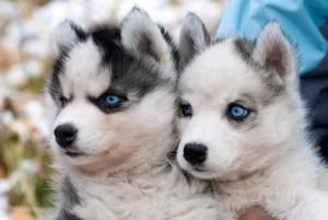 Two Pomskies Are Better Than One!