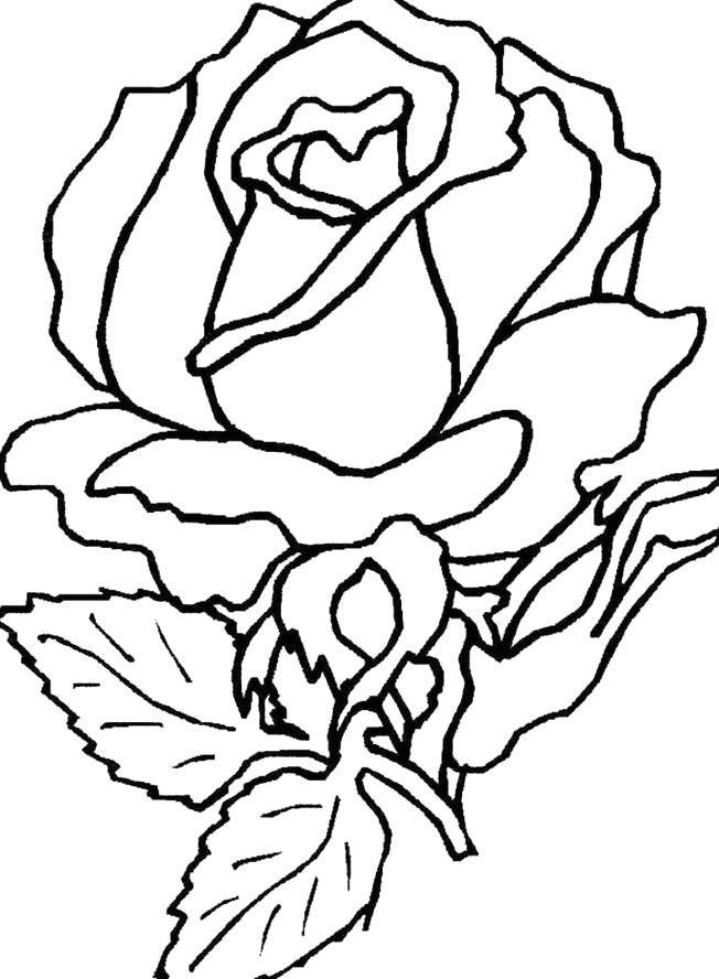 window color vorlagen rosen