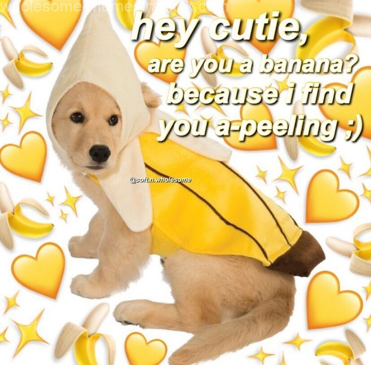 The Post Appeared First On Wholesome Memes Cute Love Memes Love Memes Cute Memes