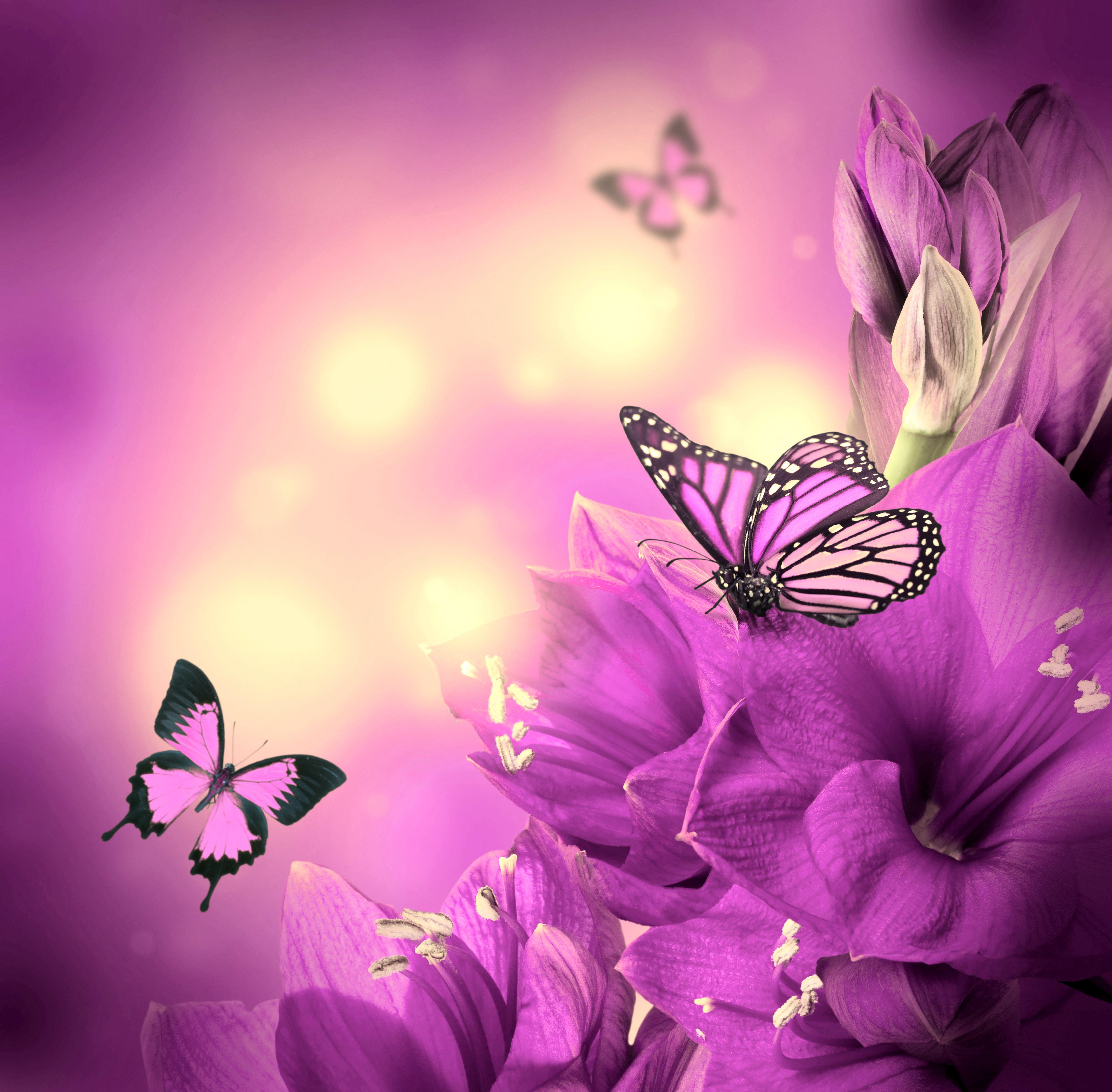 Purple Flowers Desktop Background Wallpaper Free