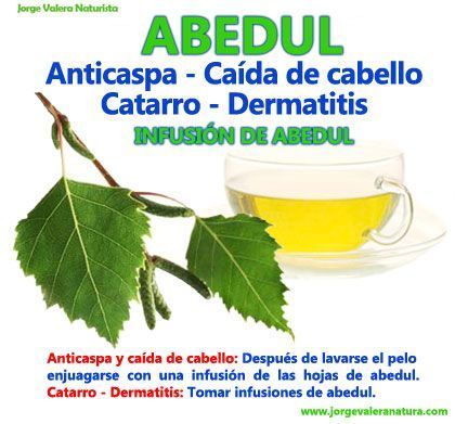 Abedul plantas medicinales hierbas y especias for Hierbas y plantas medicinales