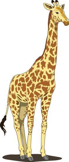 Giraffe Clipart Full Body 15 Jpg 236 554 Giraffe Images Animal Clipart Giraffe Illustration