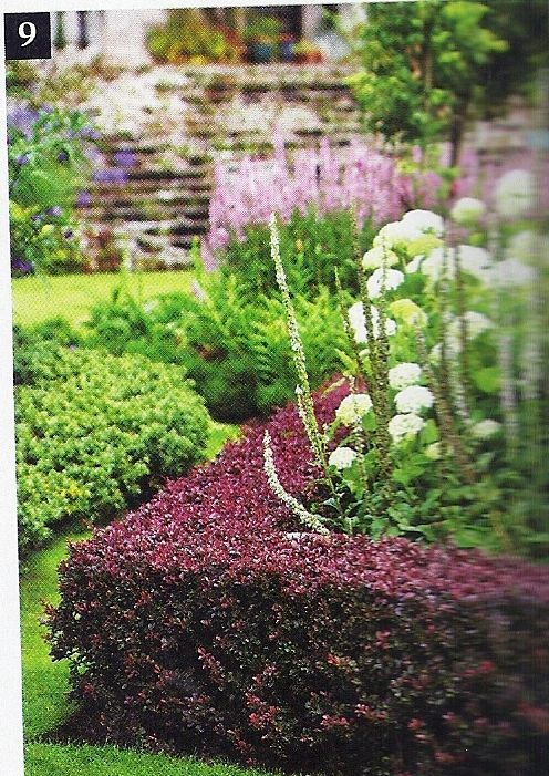 Japanese Barberry Replaces Stewarts Boxwood Italian Garden Mount Injapanese Barberry Replaces Boxwood Garden Hedges Italian Garden Garden Inspiration