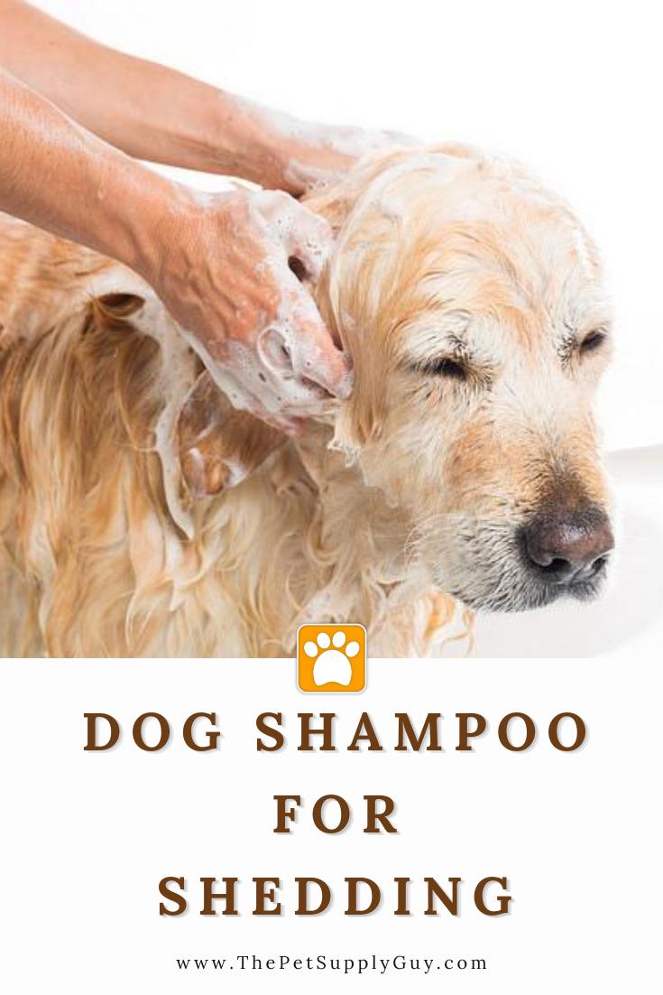 Best Deshedding Shampoo For Dogs The Pet Supply Guy In 2020 Best Dog Shampoo Dog Shampoo Deshedding Shampoo