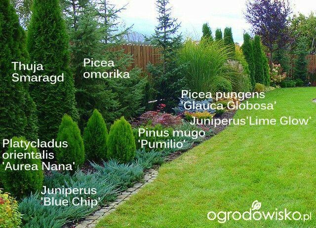 35+ Evergreen landscaping ideas ideas