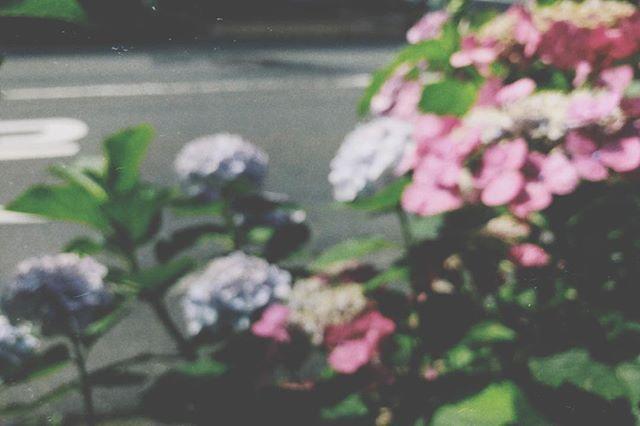記憶にも 残らないなら 存在は 誰が証明してくれる  #その瞬間に物語を  #hibi_jp  #何気ない瞬間を残したい  #写真で伝える私の世界  #rox_captures  #関西写真部  #ファインダー越しの私の世界 #ig_photooftheday  #HUEART_life  #ifyouleave  #indies_gram  #indy_photolife  #作品撮り  #pure_sensuality  #photooftheday  #unsquares  #日常  #非日常  #紫陽花 #unknownjapan  #記憶と記録  #2_fineart #jp_mood #デジタルでフィルムを再現したい #フィルムに恋してる #スクリーンに恋して #誰かの記憶に残る写真 #儚くて何処か愛おしい様な #as_archive #キリトリセカイ