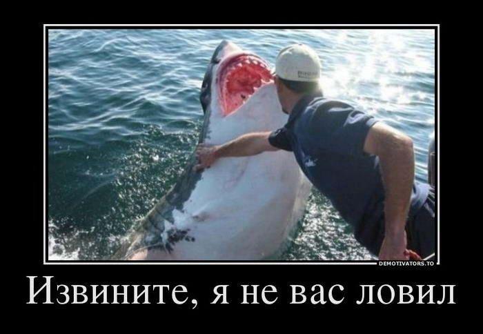 Демотиваторы о рыбалке. | Забавные фото, Веселые мемы ...