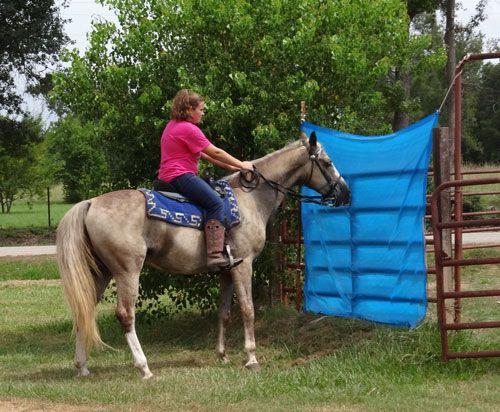 Tennessee Walking Horses - CLOUD 9 WALKERS (Walkaloosa