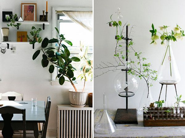Captivating 20 Unforgettable Indoor Plant Displays