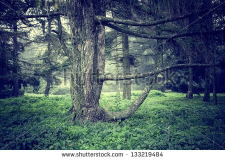 fantasy forest background stock photography shutterstock forest
