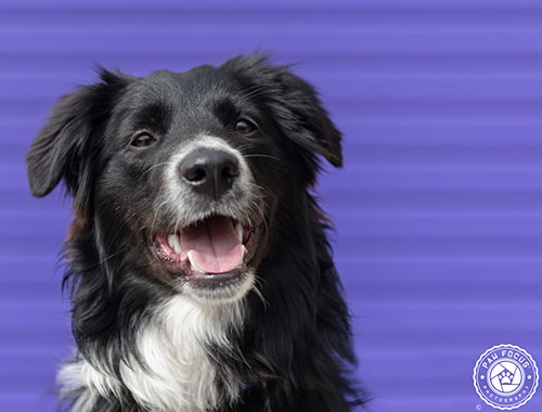 He S A One Year Old Border Collie Who Works At Equestrian Excellence In Melbourne Working Dogs Dogs Horses And Dogs