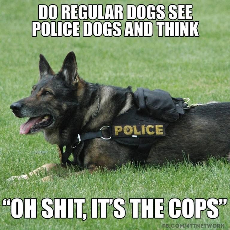 Men S Humor Timeline Photos Police Dogs Dog Memes Dogs