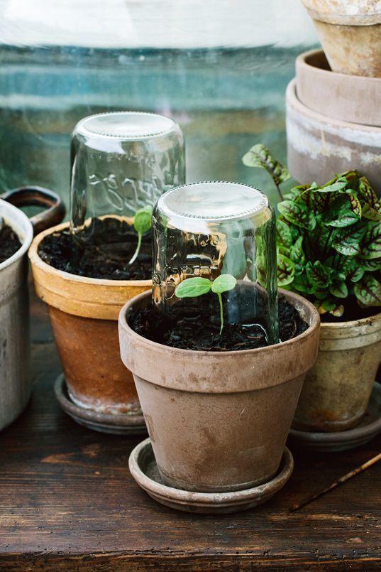 Wildkräuter-Polenta #kleinekräutergärten