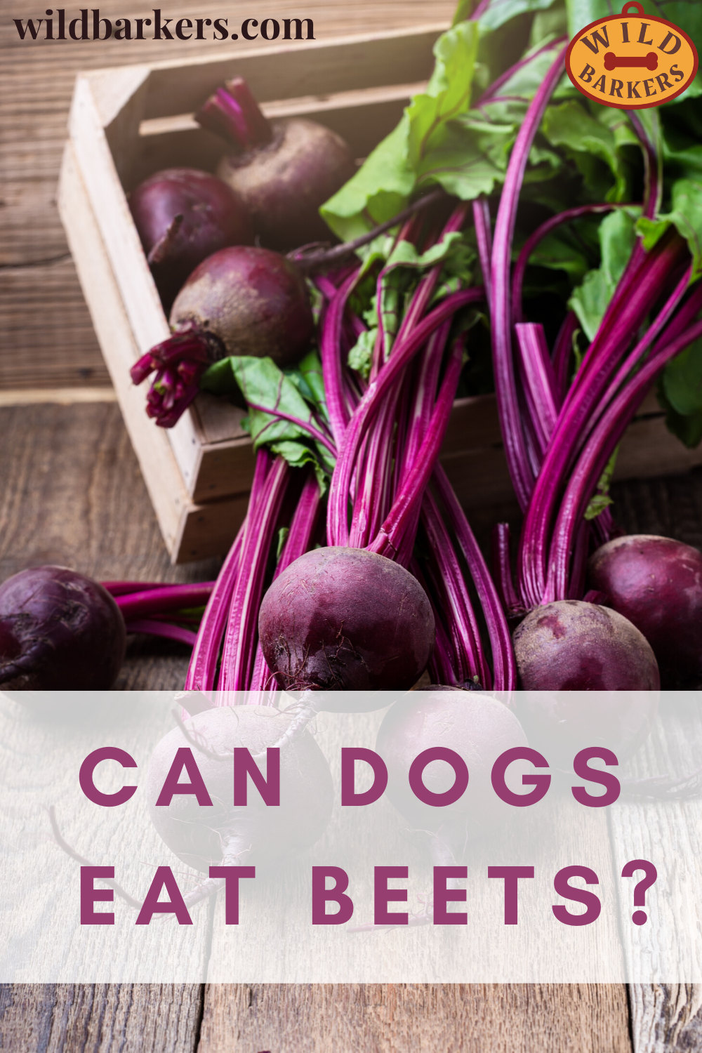 Can Dogs Eat Beets? in 2020   Can dogs