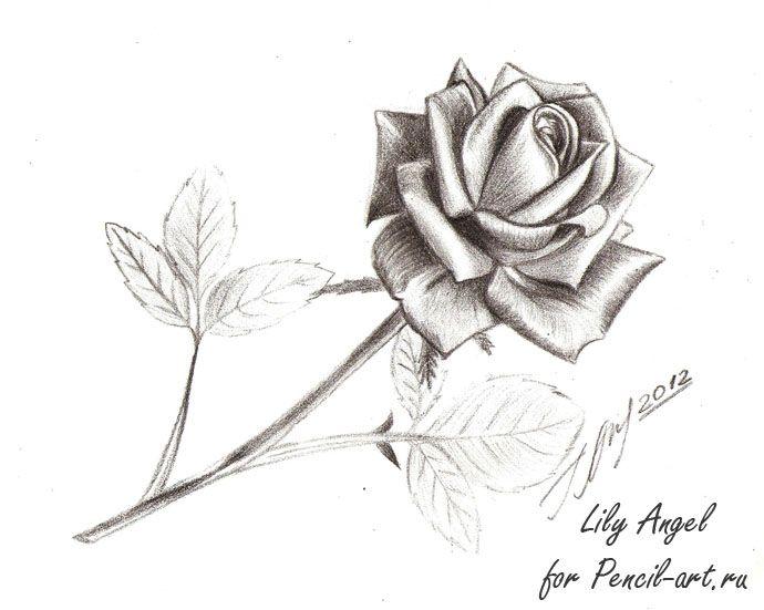 Цветы рисунок карандашом розы