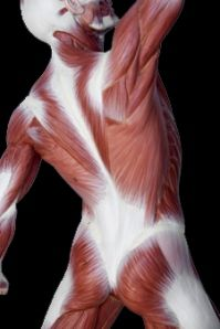 Functional Anatomy Blogspot: Discussion boards about assessment and ...