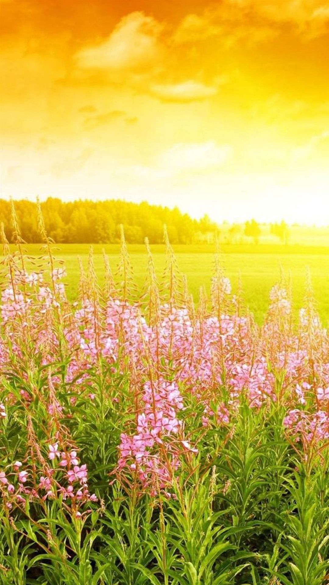 Brilliant Golden Sunshine Spring Flower Bloom Field Nature