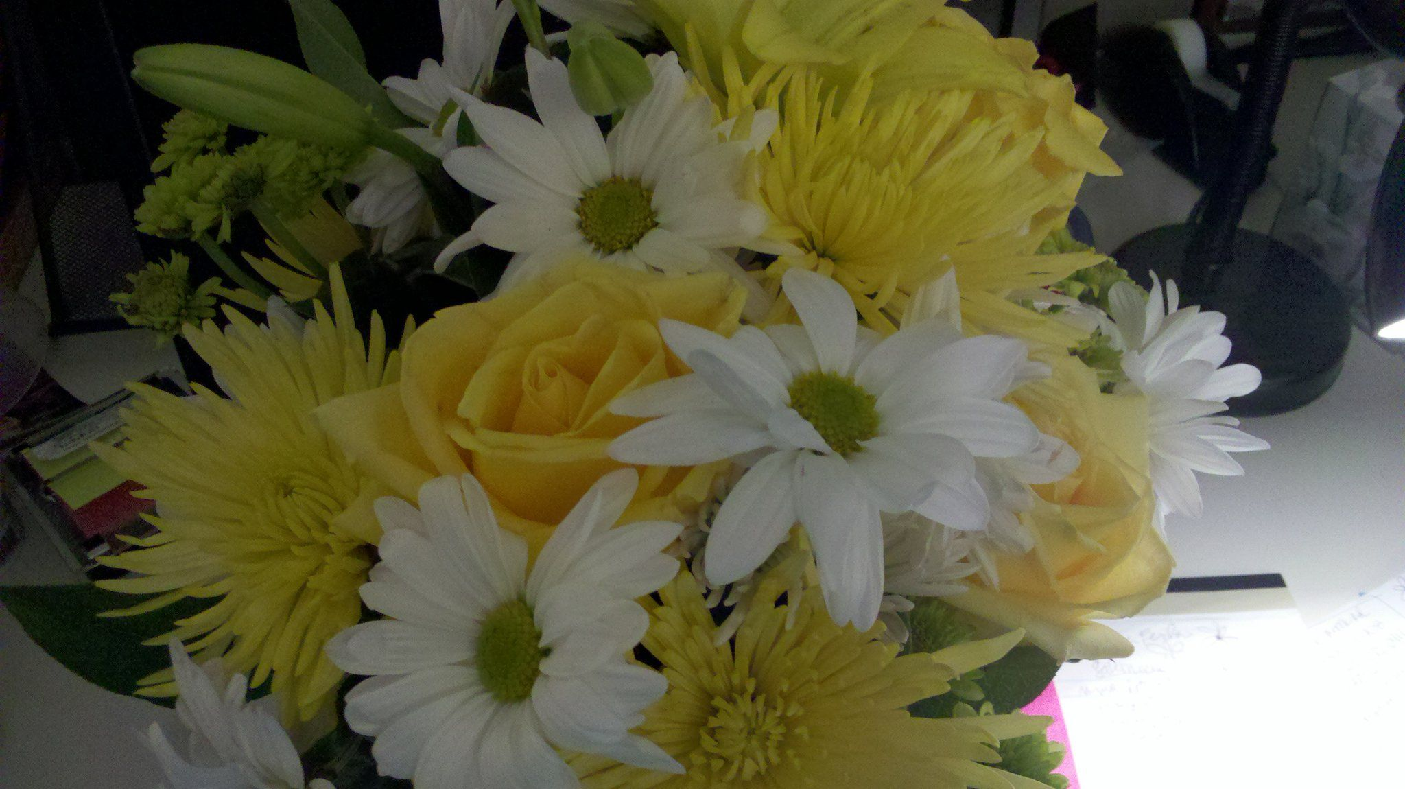 Daisies delivered to me from my mom warm fuzzies daisy