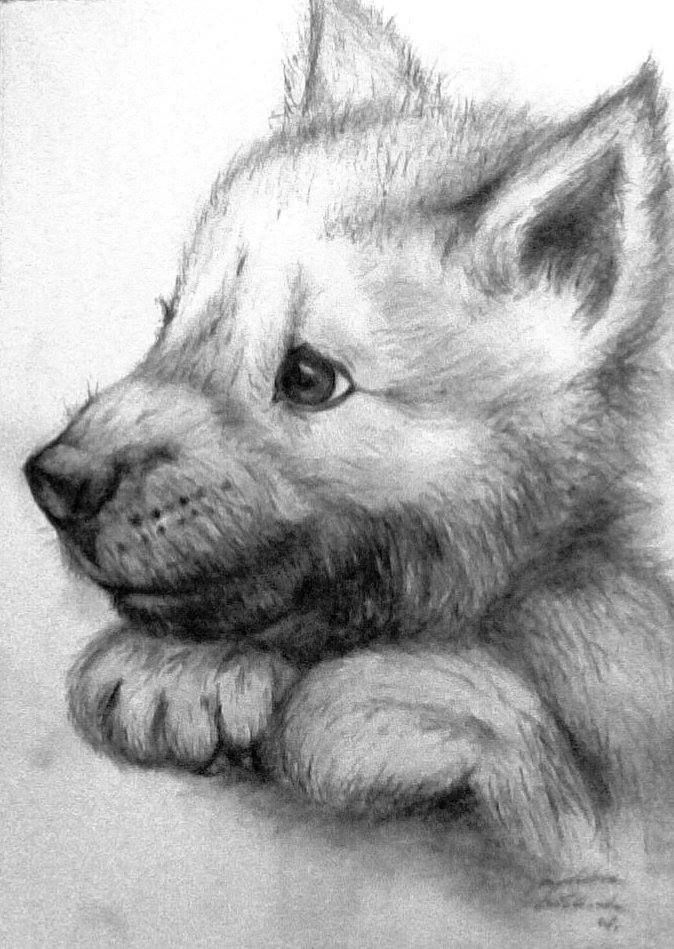 Little Wolf Wolf Sketch Wolf Painting Wolf Drawing