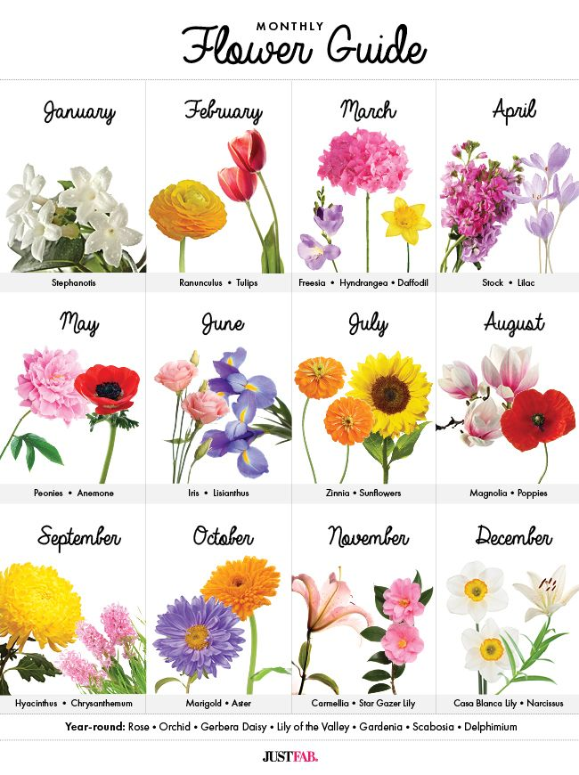 Monthly flower guide - a must-have graph to learn what's in season!