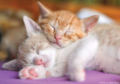 Santino Roger Sleeping Kitten Cute Cats And Kittens Good Night Cat