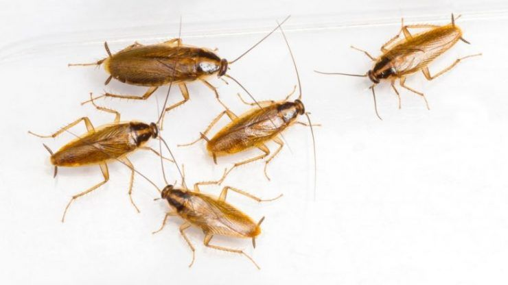 Pin On Bugs
