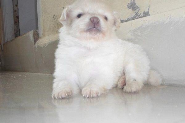 Pomeranian Puppies For Sale In Hyderabad Zoe Fans Blog Cute Baby