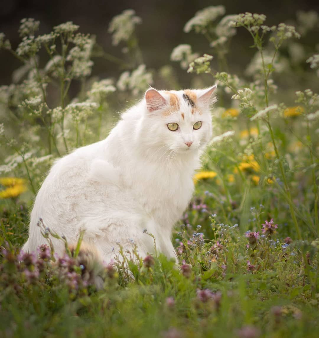 Mausi Miseli On Instagram Wherever Life Plants You Bloom With Grace Bepositive Cute Cats Kitten Pictures Tortoiseshell Tabby