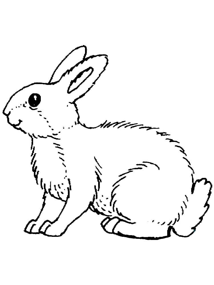Free Printable Easy Bunny Coloring Pages Free Coloring Sheets Bunny Coloring Pages Animal Coloring Pages Cartoon Coloring Pages