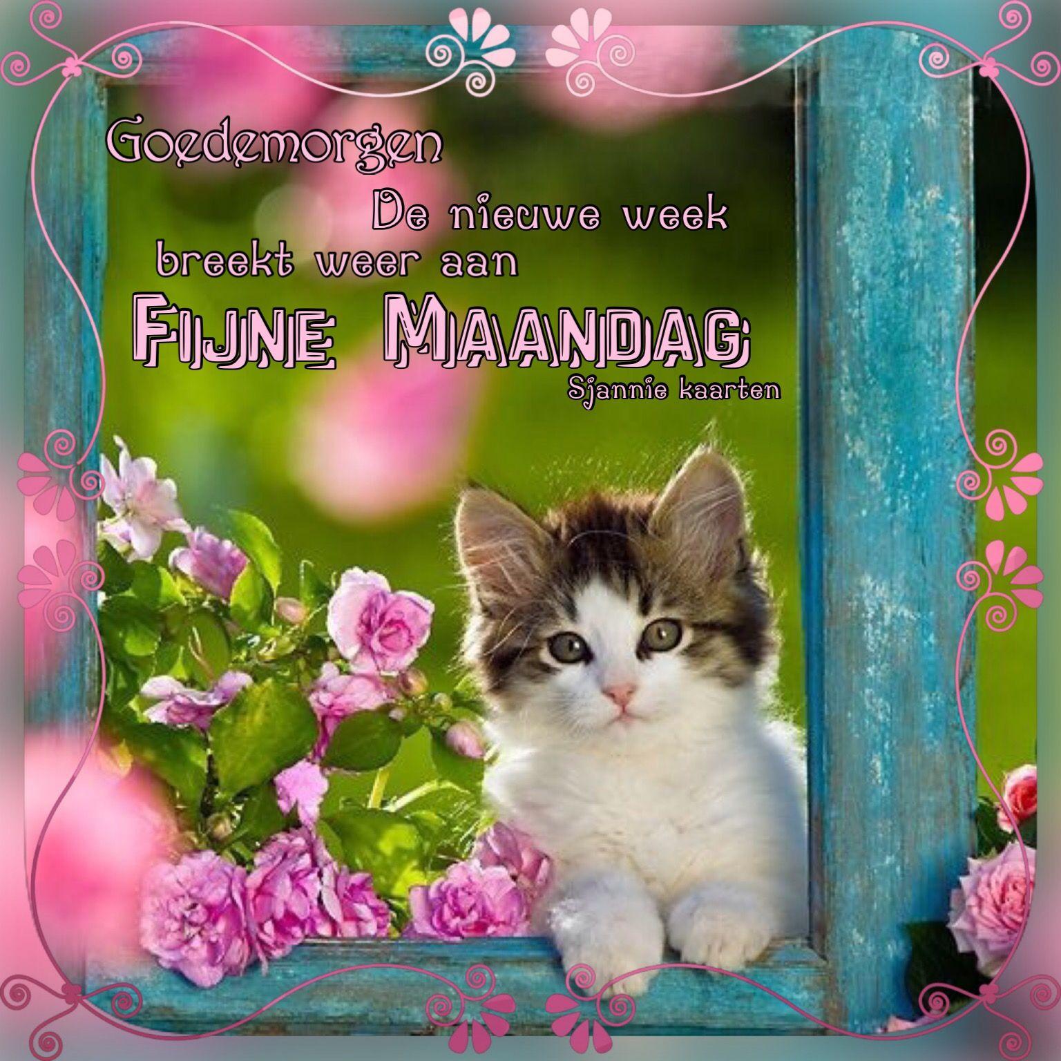 Pin Van Ingrid Platteau Op Sjannie Kaarten Made By Sjannie Kaarten Goedemorgen Schattig Schattige Katten