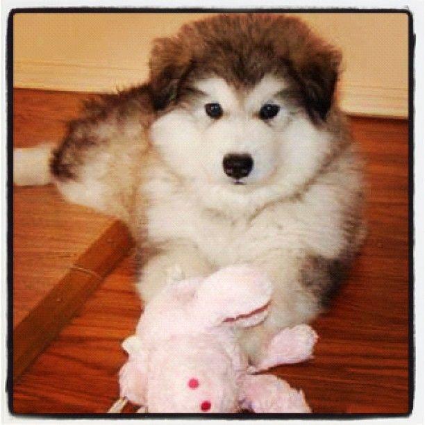 #dog #doglife #dogoftheday #puppyfun #puppyface #puppydogeyes