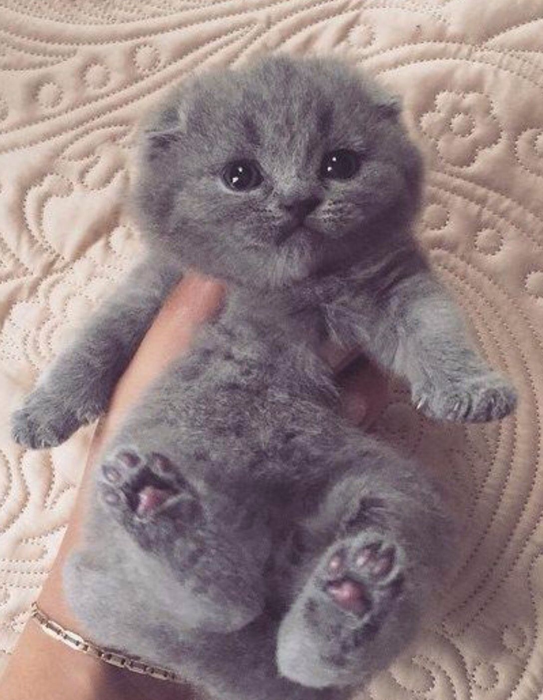 How cute can you get? Picture from Twitter