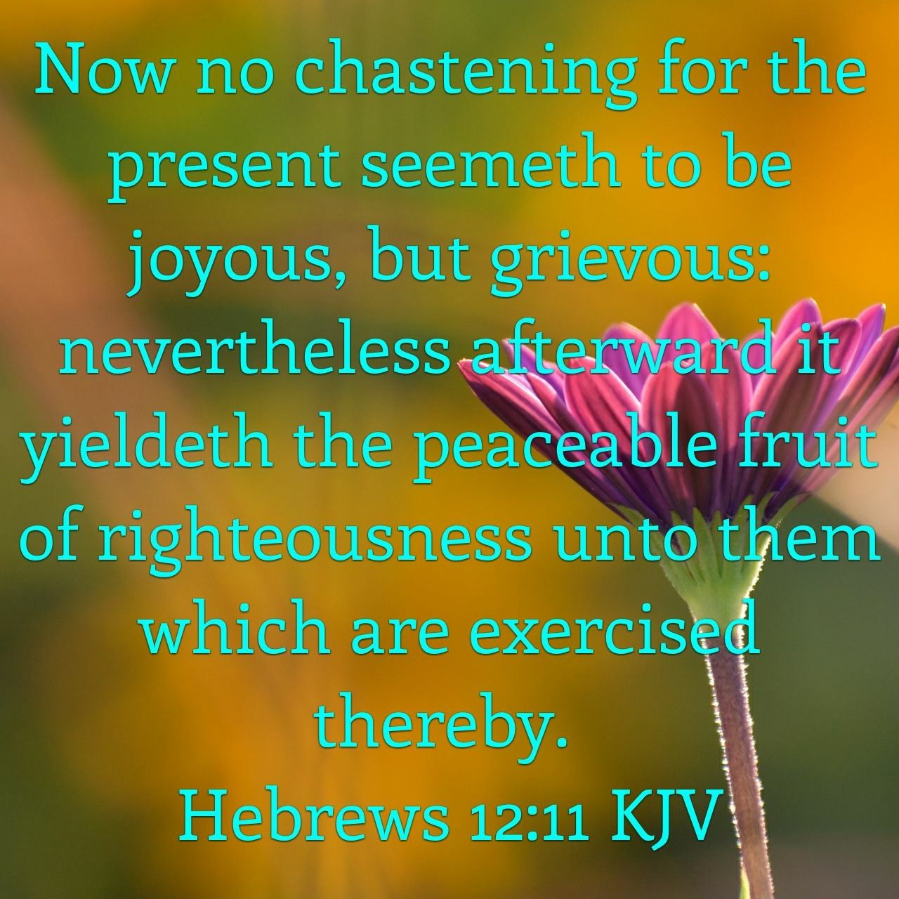 Hebrews 12:11 King James KJV | Bible scriptures, Hebrews 12, Kjv